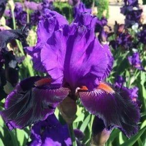 069_high_profile_irisjardin_jardindesiris