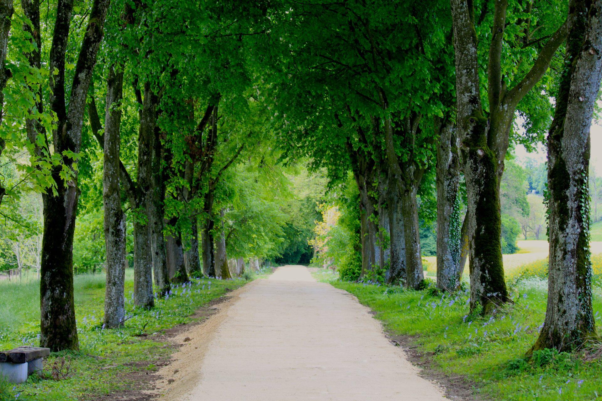 jardindesiris_allee_cavaliere