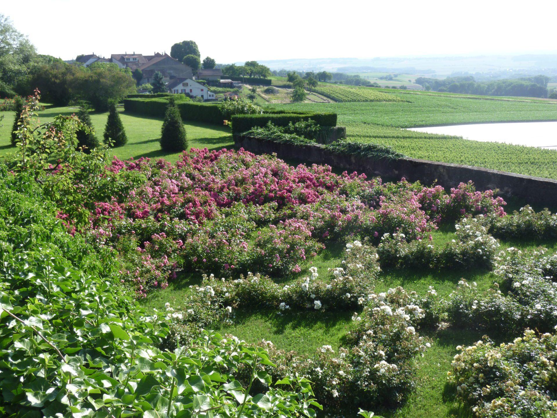 jardindesiris_dorianne's_garden_roses