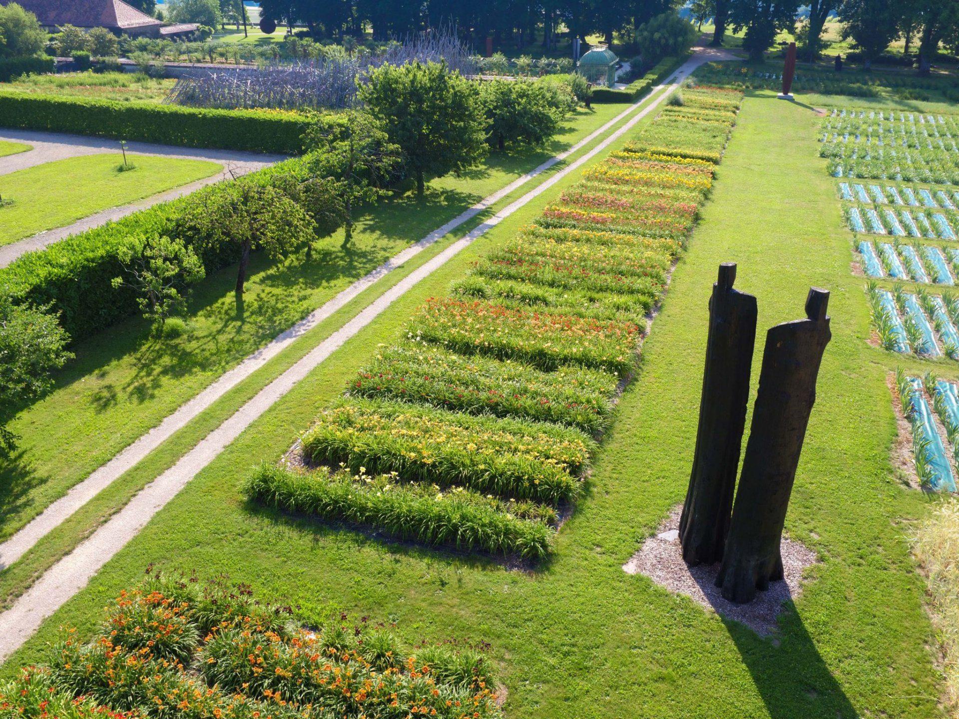 jardindesiris_lys_hémérocalles