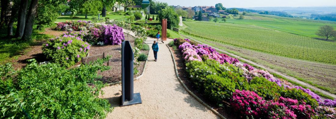 jardindesiris_daria's_garden