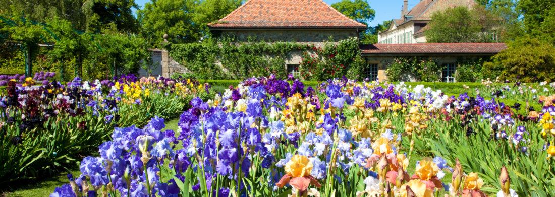 jardindesiris_chatelain's_garden