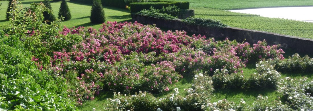 dorianne_garden_roses_jardins_des_iris