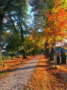 IMG 4135 225x300 - Nouveauté : Le Pass de saison !