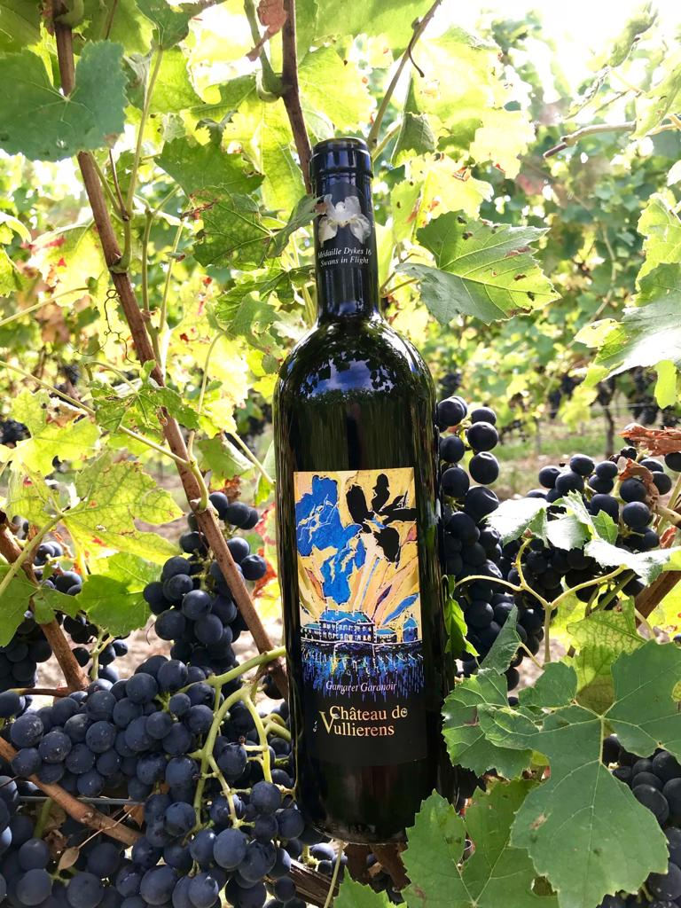 Notre bouteille de Gamaret Garanoir dans les vignes lors de la balade des cépages.