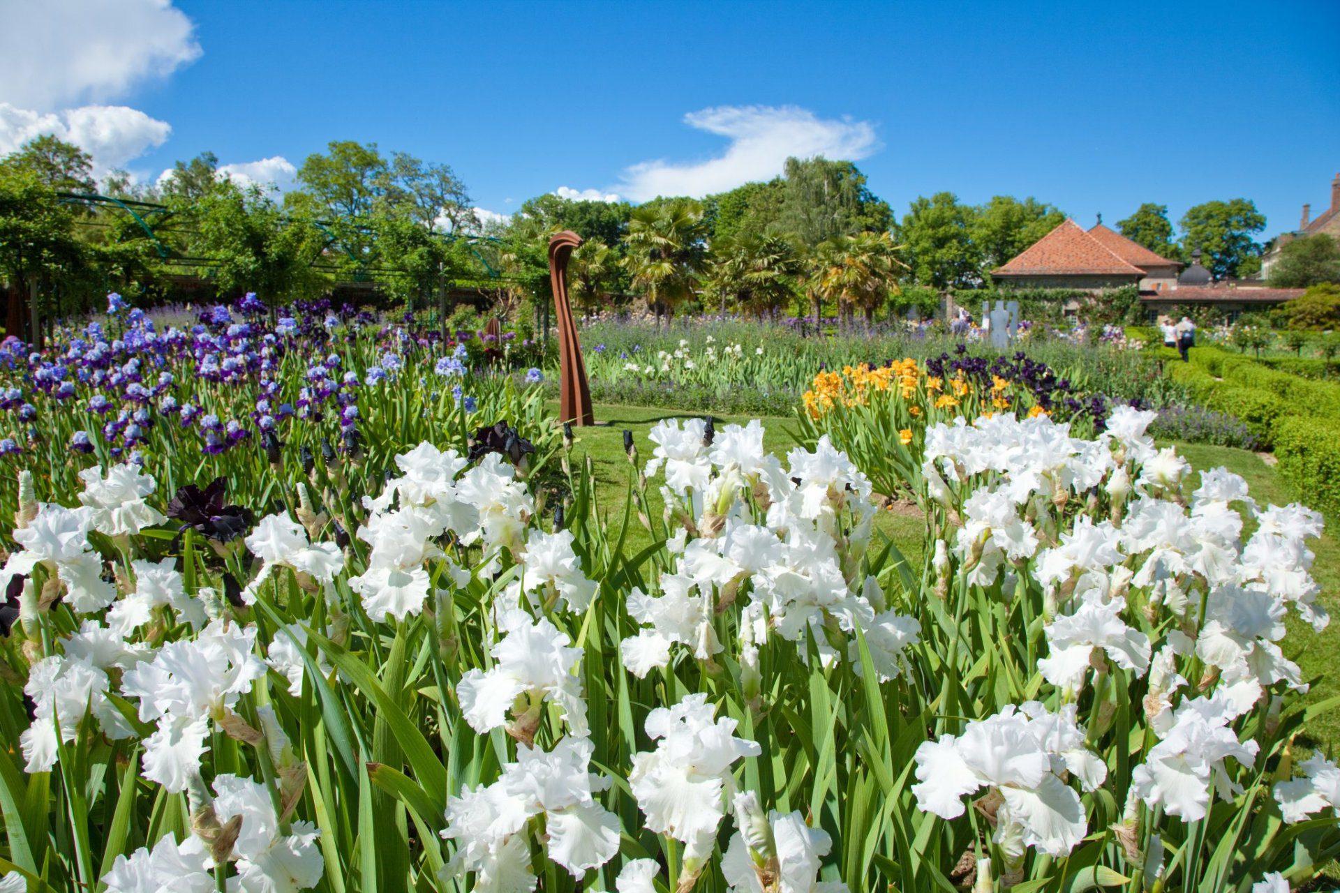 Le Jardin de Doreen rempli d'iris de toutes les couleurs.