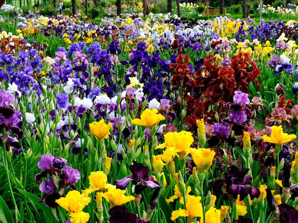 chateau vuillerens commandez iris 1 - Pass de saison adulte