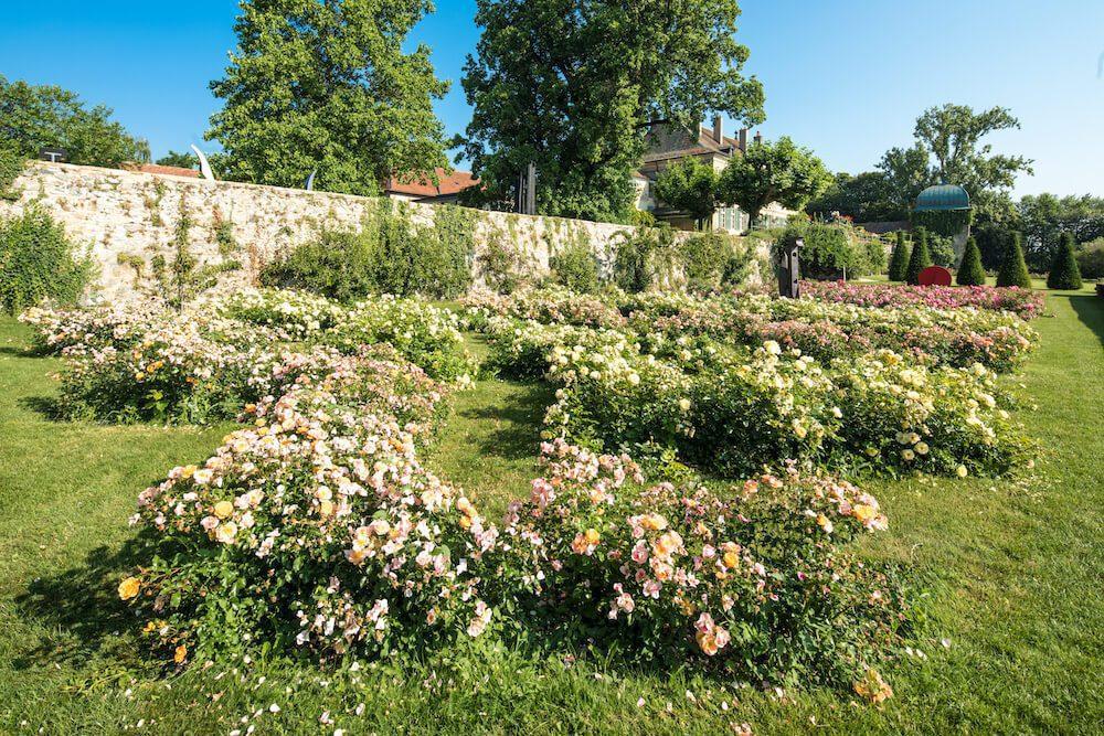 Gros plan des zig zags de rose du jardin de Dorianne.