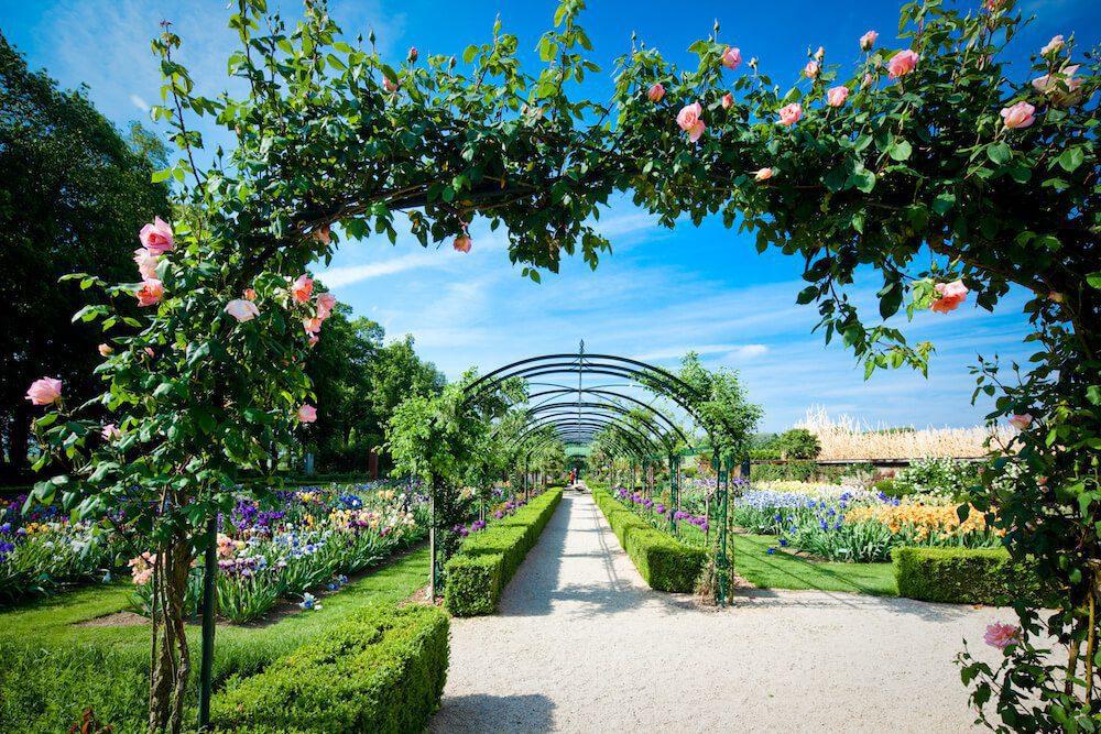 Laburnum tunnel et arche de roses du jardin de Doreen.