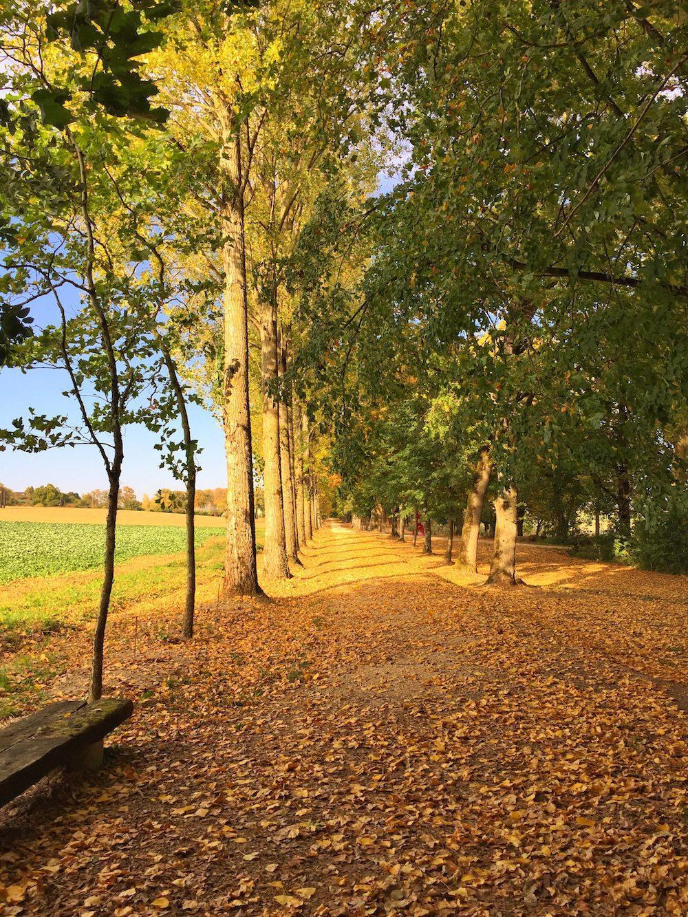 L'allée cavalière aux couleurs d'automne.