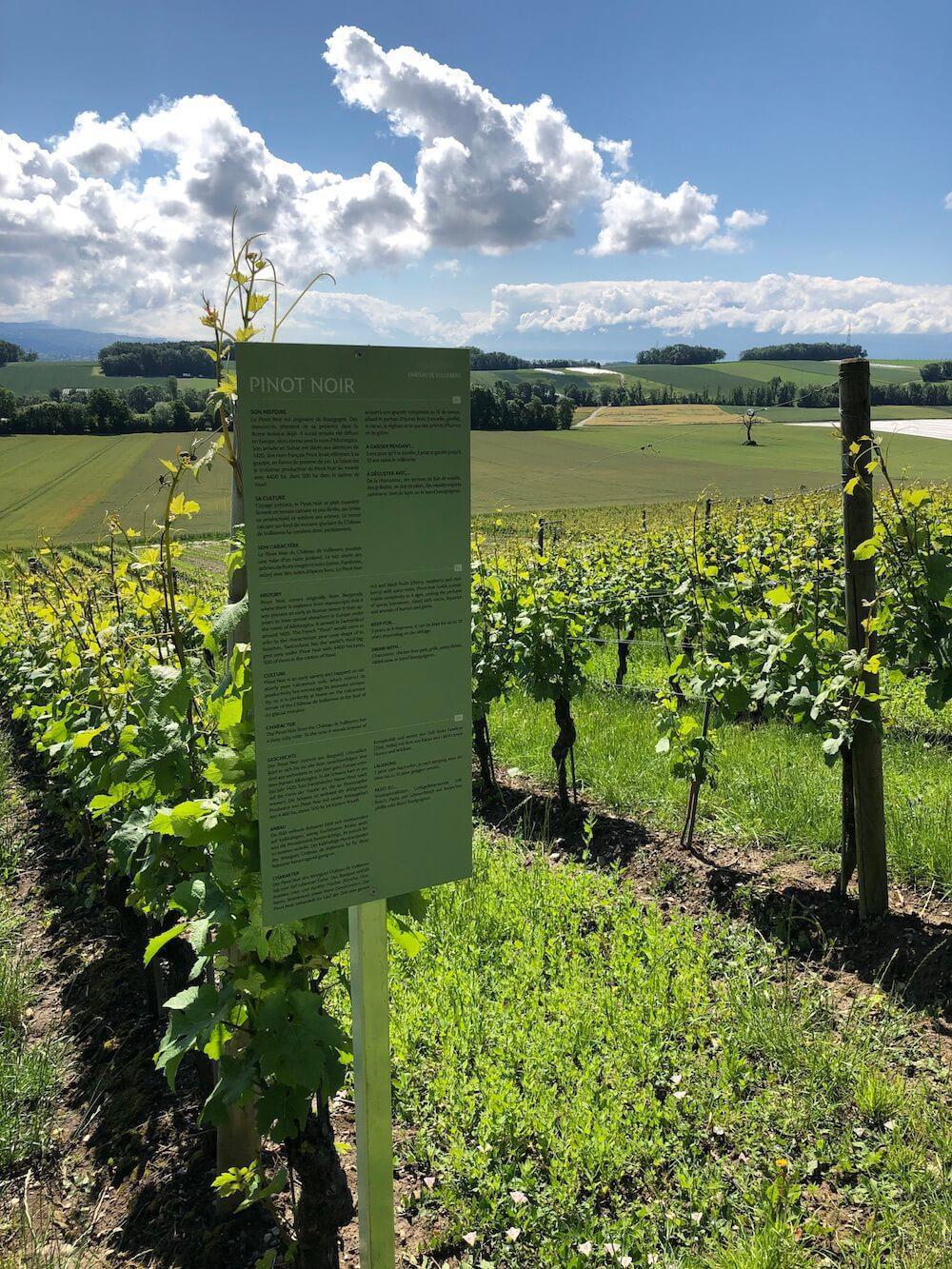 Panneau explicatif sur les cépages le long des vignes.