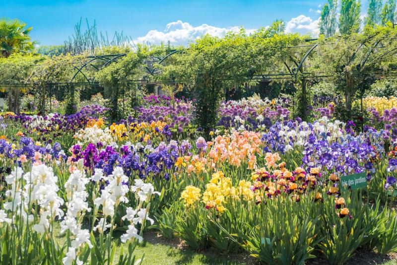 Le Jardin de Doreen explosant de couleurs !