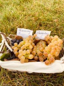 chateau de vullierens balade dans les vignes 225x300 - Programme automnal