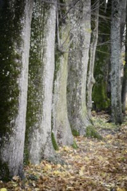 Balade des arbres.